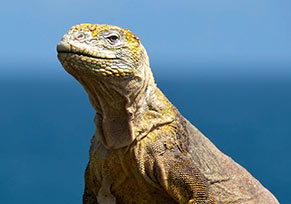 Galapagos Islands (San Cristóbal) Language Course Prices - © pkphotoscom